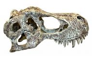 Komodo T-Rex skull L