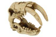 Saber Tooth Tiger Skull
