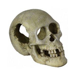 Sleeping hollow skull