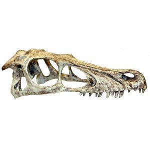 Komodo Raptor skull XL