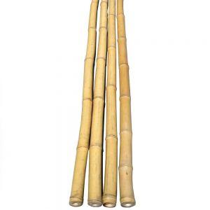 Bambus rør 40-55 mm. 50 cm.