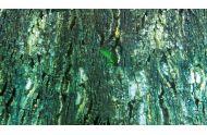 Trixie baggrunds folie regnskov