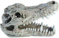 HQ Crocodile skull