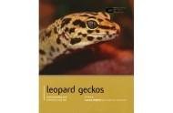 Leopard gekko bog af Lance Jepson