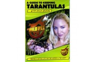 Guide to keeping tarantulas DVD
