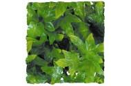 Congo Ivy L