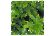 Congo Ivy S